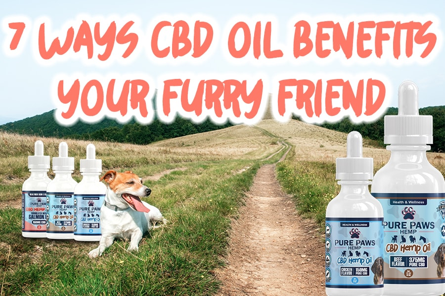 pure paws cbd oil benefits your pet