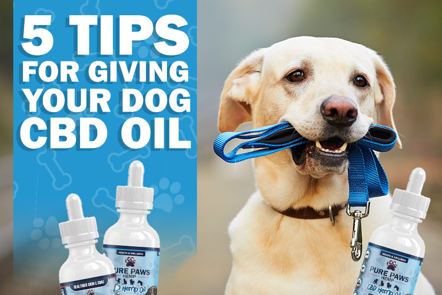 pure paws blog giving your dog cbd oil