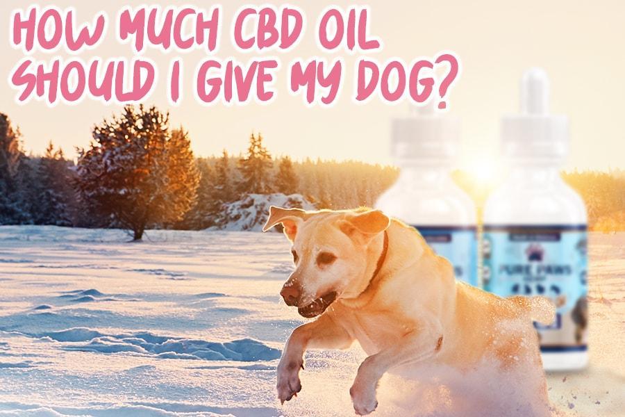 pure paws cbd hemp oil for dogs