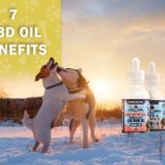 CBD Oil benefits for dogs and pets