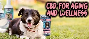 pure paws oil biscuits and paw butter cbd for pets