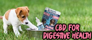 dog biscuits and hemp oils cbd for pets digestive health