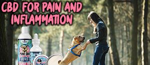 cbd for pets pain and inflammation