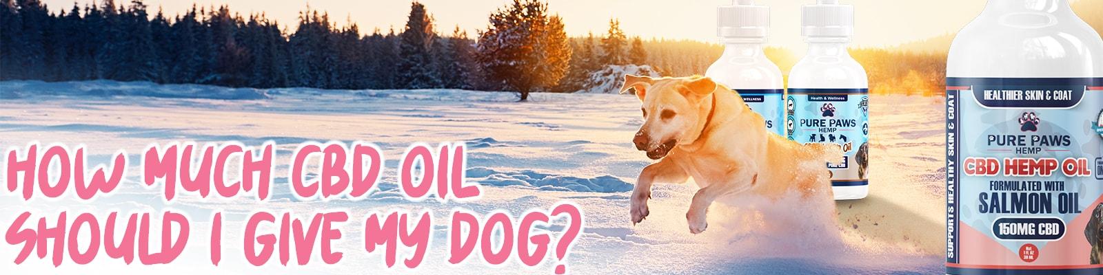 pure paws cbd hemp oil for dogs dosage