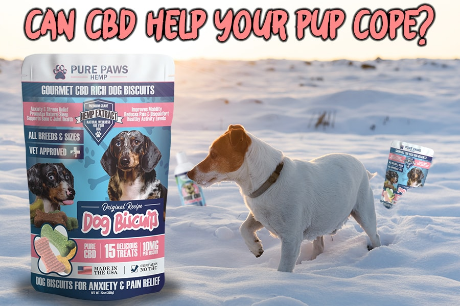 can cbd dog treats for anxiety help your pup cope