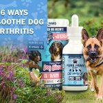 Soothe Dog Arthritis Symptoms with CBD