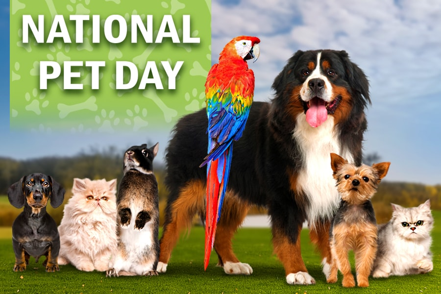 National Pet Day Benefits