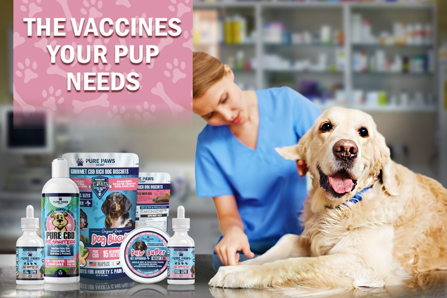 Necessary Dog Shots and Puppy Vaccines