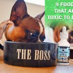 Foods that are toxic to dogs