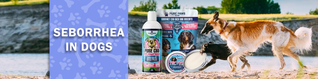 CBD For Seborrhea in Dogs