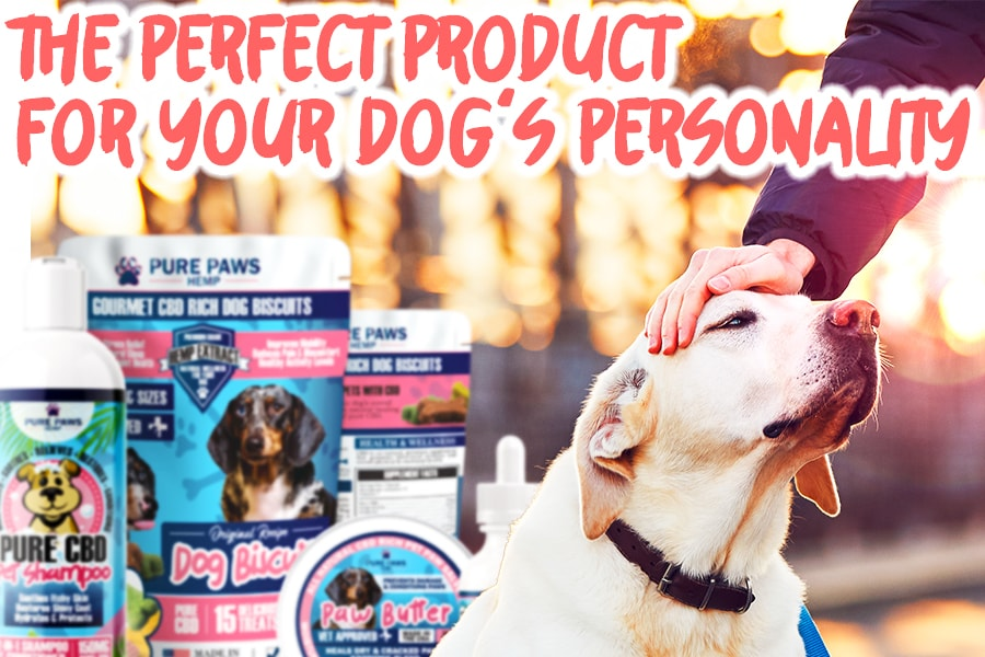 perfect cbd bundle product for your dog's personality