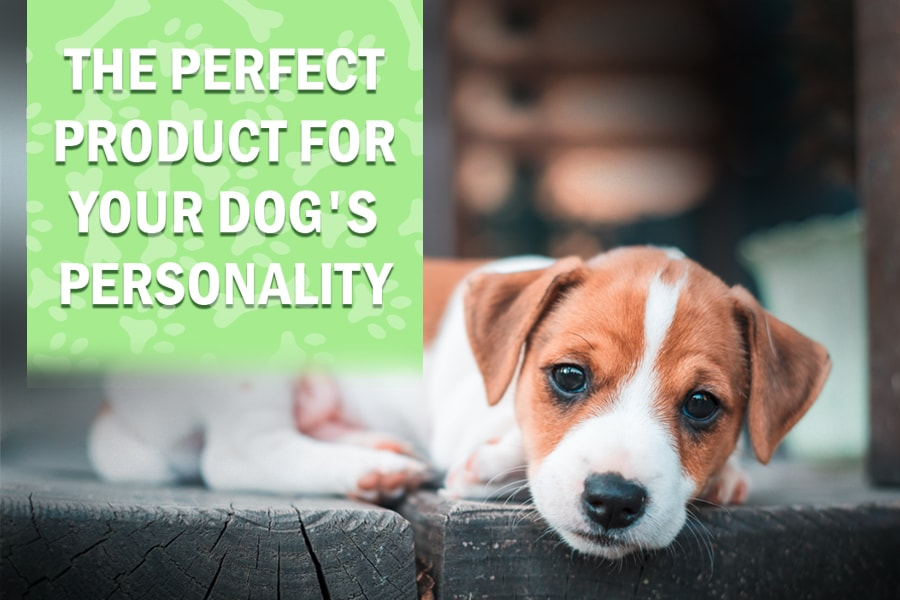Products for Dog Personality Traits
