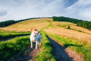 dog personality trailblazing tail wagger in a field