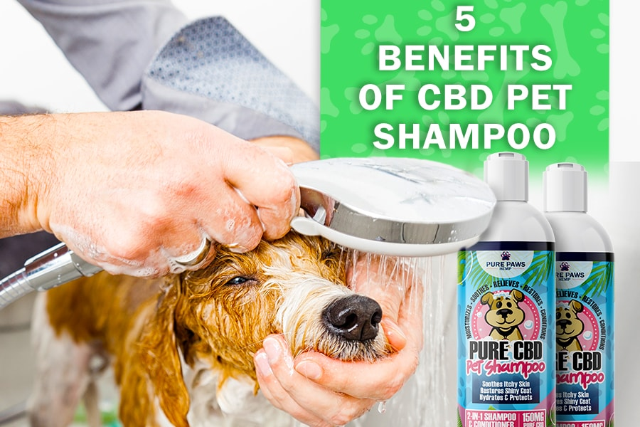 CBD Pet Shampoo and Conditioner for Skin allergies and conditions