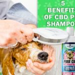 CBD Pet Shampoo and Conditioner