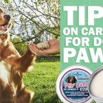 pure paws hemp caring dog paws
