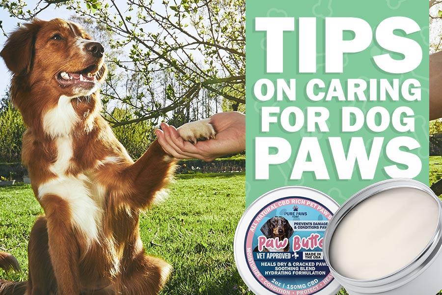 pure paws hemp caring dog paws