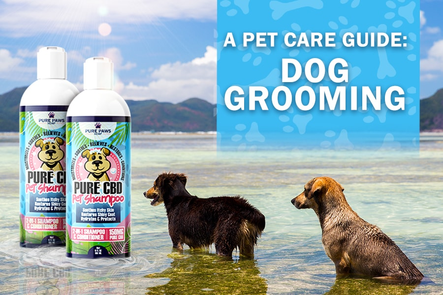 A Pet Care Guide for Dog Grooming Blog