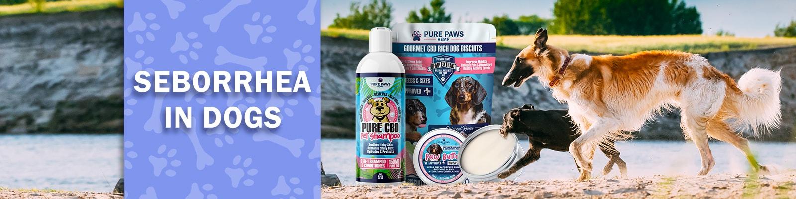 CBD for seborrhea in dogs with dandruff