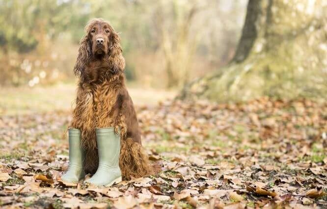 Dog in Booties Pet Products for the Spring